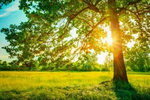 nyár 300x200 - 2018 nyár: Az emberi kapcsolatok rendeződésének ideje
